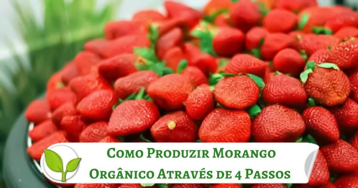 Como Produzir Morango Orgânico Através de 4 Passos Simples