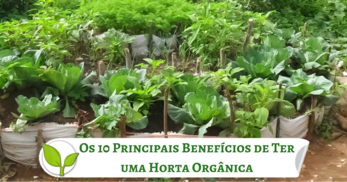 Os 10 Principais Benefícios de Ter uma Horta Orgânica
