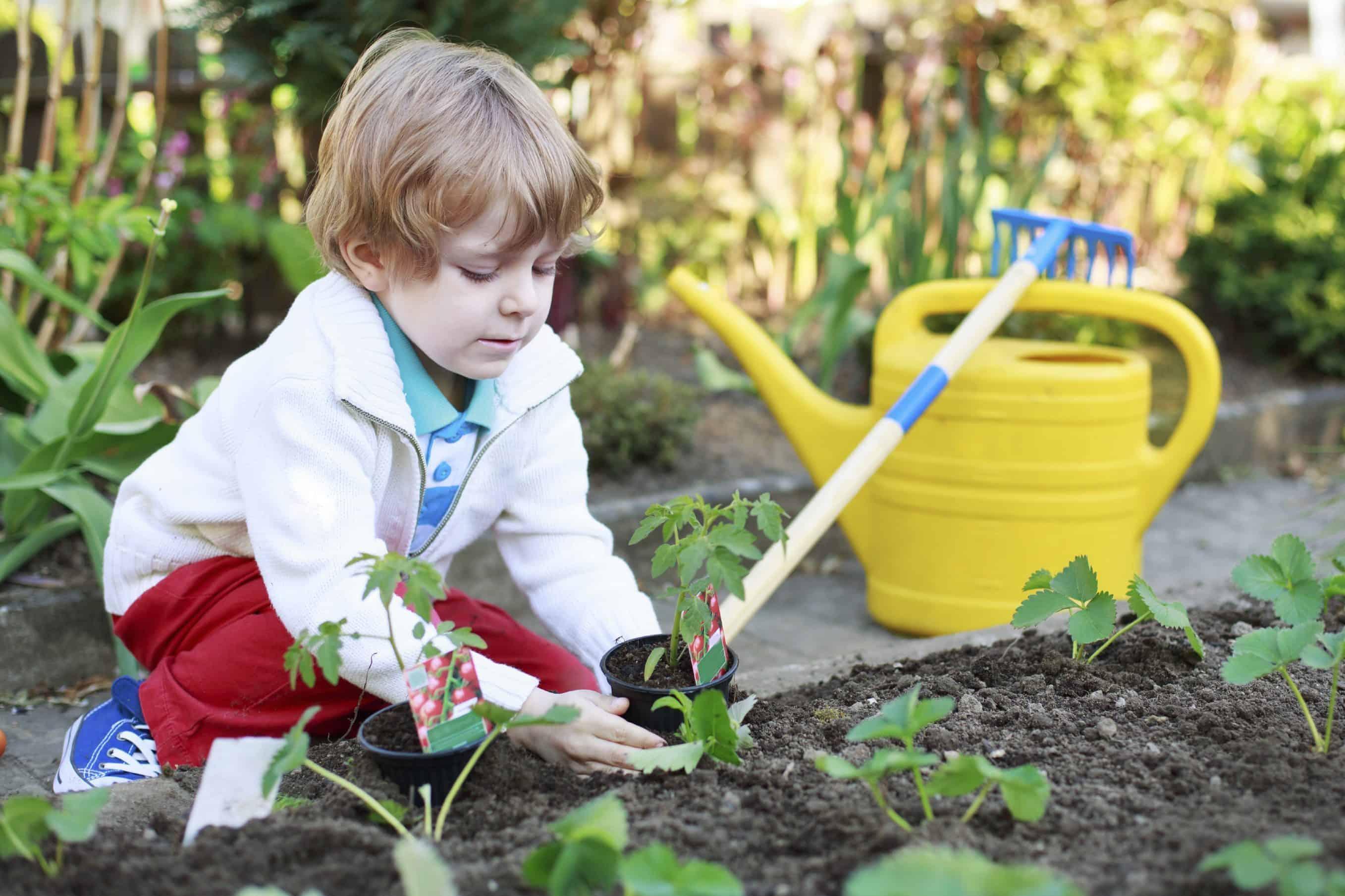 como fazer compostagem organica passo a passo