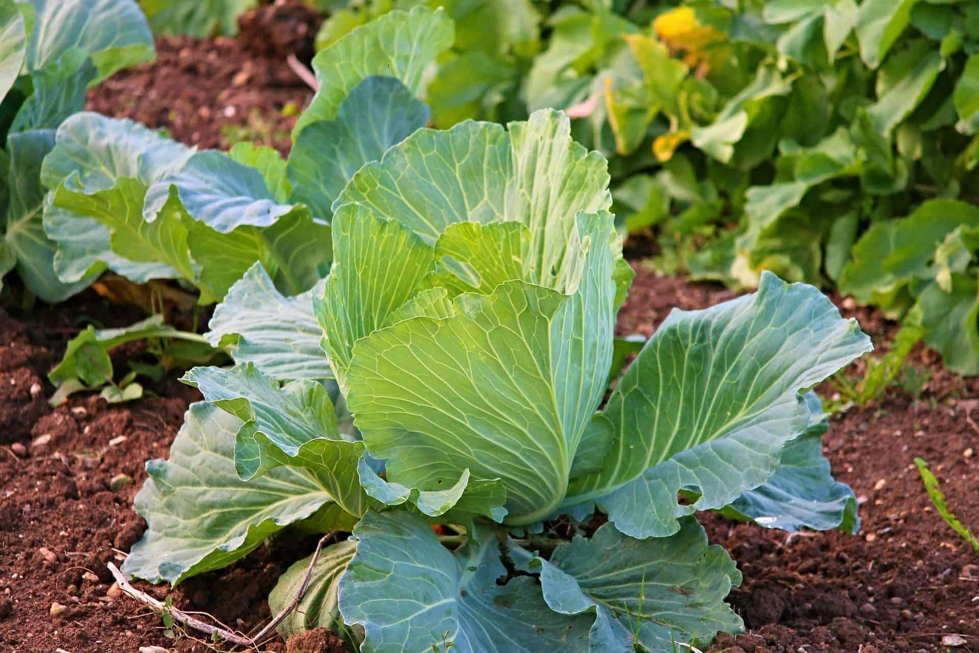 como produzir hortas organicas em casas e apartamentos