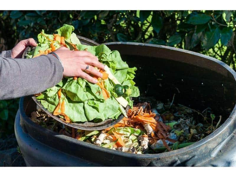 compostagem organica domestica