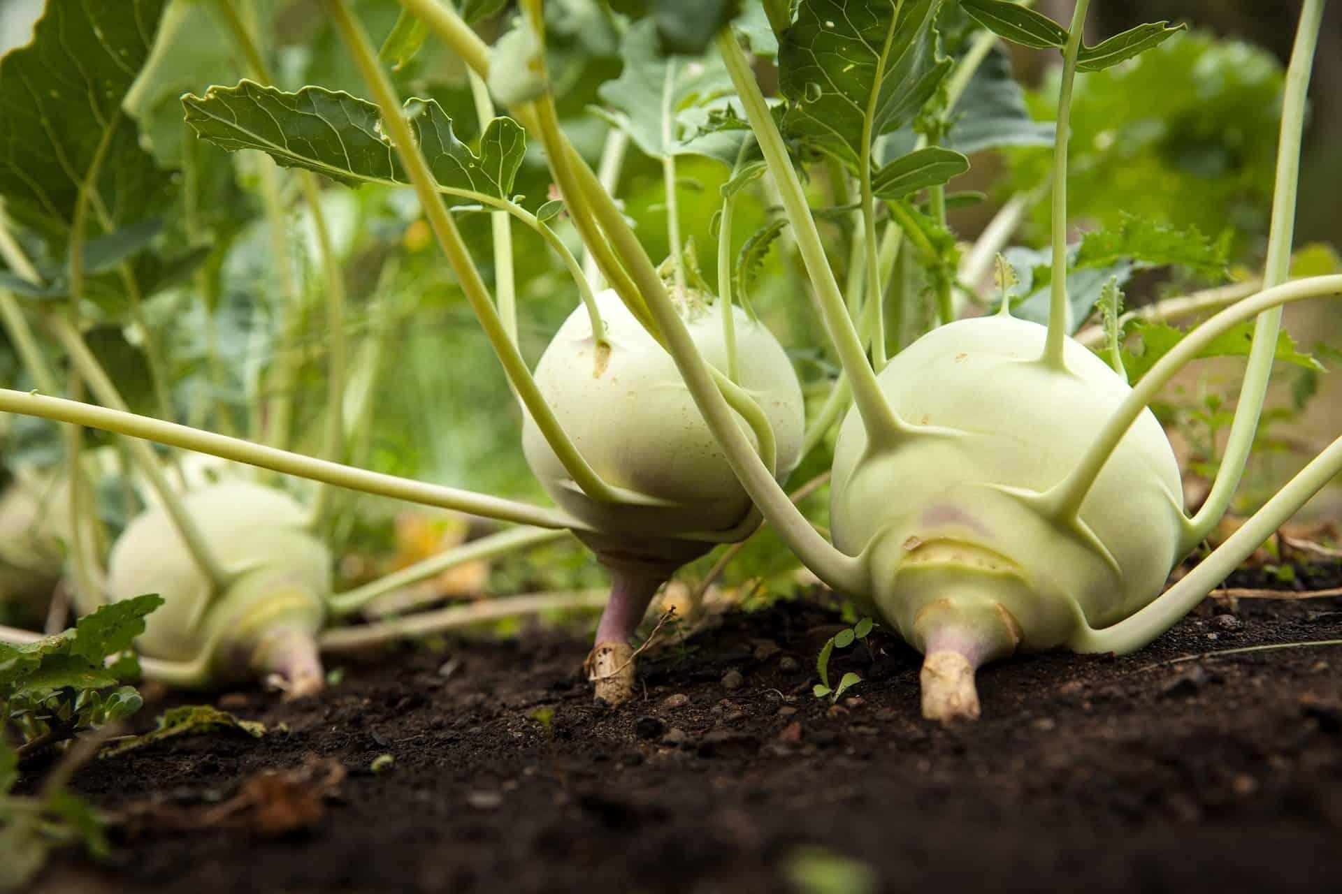 hortas organicas