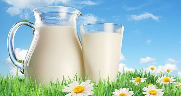 leite orgânico